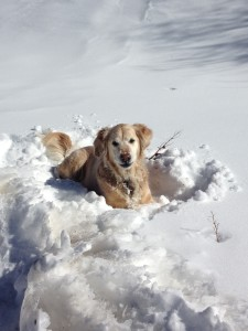 Maggie in Marble Snow