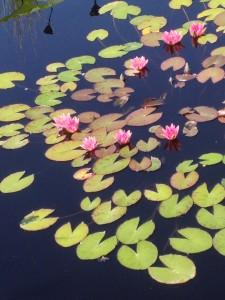Fall at Monet Garden, DBG