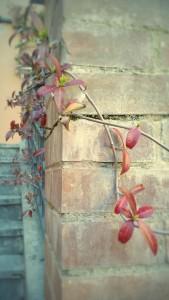 Springtime in Italy